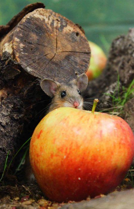 2-Feb-LauraPomfret-YN-Mouse-HiRes