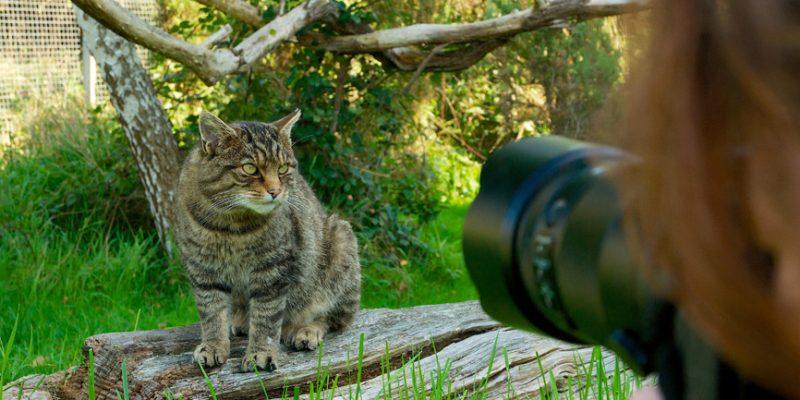 Camera&Wildcat07-21
