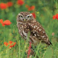 Cards-Owls-RGB-web12-20