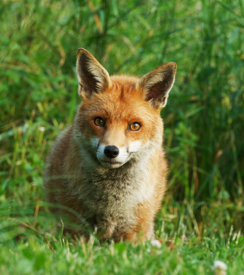 Fox-flowers07-21
