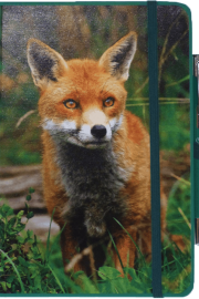 NB-Fox-web10-20 - Copy