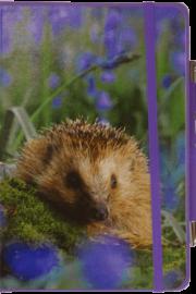 NB-Hedgehog-web10-20 - Copy