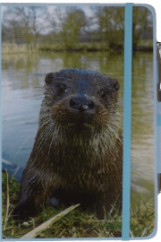 NB-Otter-web10-20 - Copy
