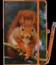 NB-Squirrel-web10-20 - Copy