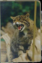 NB-Wildcat-web10-20 - Copy