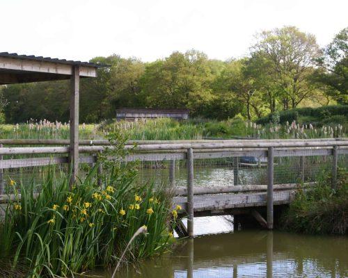 New Website - Nature Reserve-Boardwalk 07-18