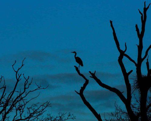 New Website - Nature Reserve-Heron at dusk 07-18