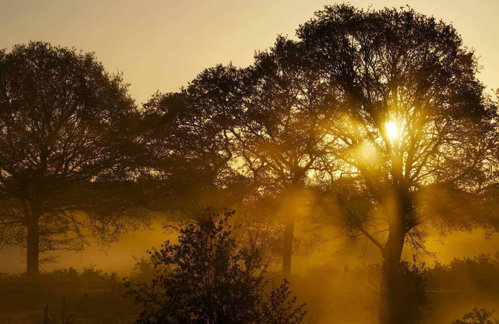 New Website - Nature Reserve- Sun Rise 07-18