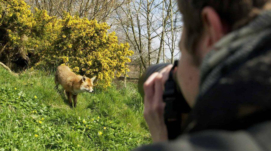 New Website - Photogy-Fox&Gorse 07-18