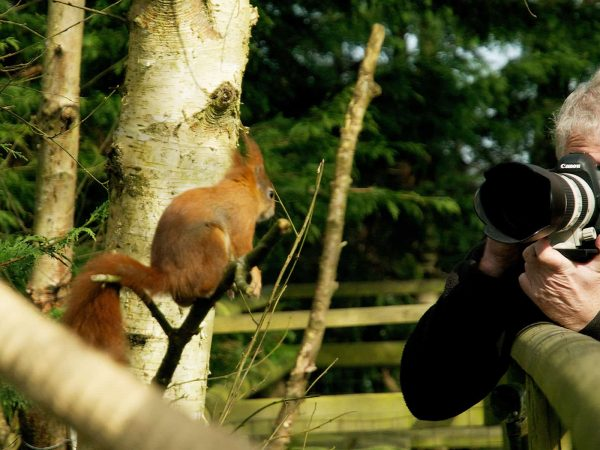 New Website - Photogy-Red Squirrel 07-18