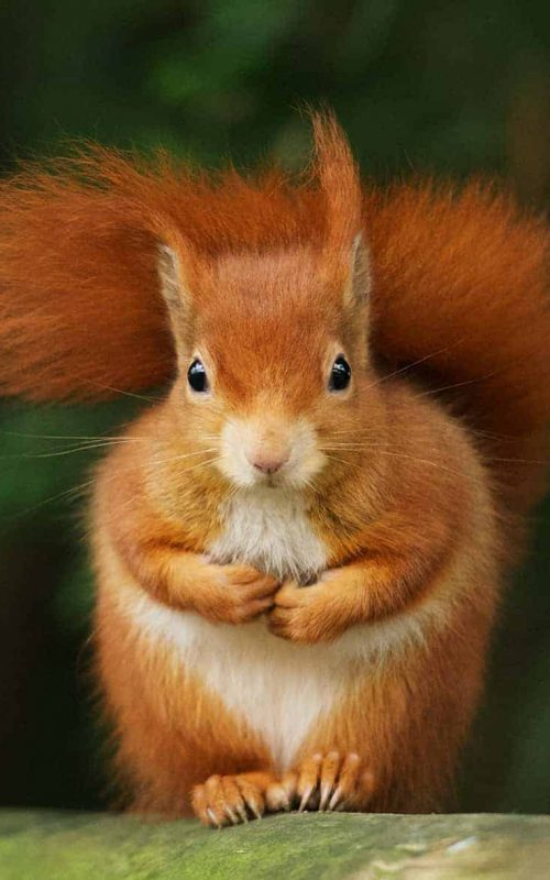 New Website - RedSquirrel-CovAppeal03-20