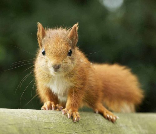 New Website - Squirrel kit on fence rail 07-18