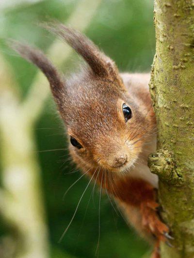 New Website - Squirrel peeking pt 07-18