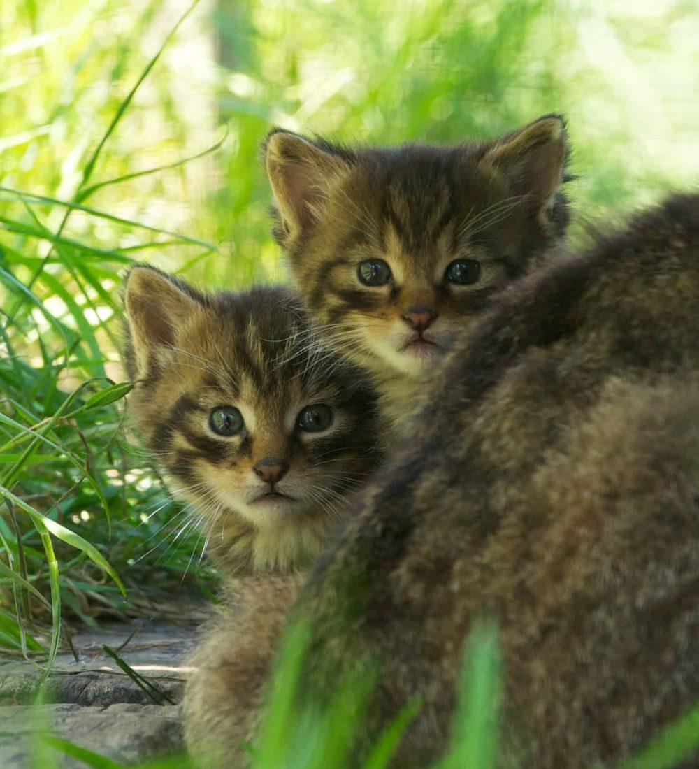 New Website - Wildcat Kits 12-18