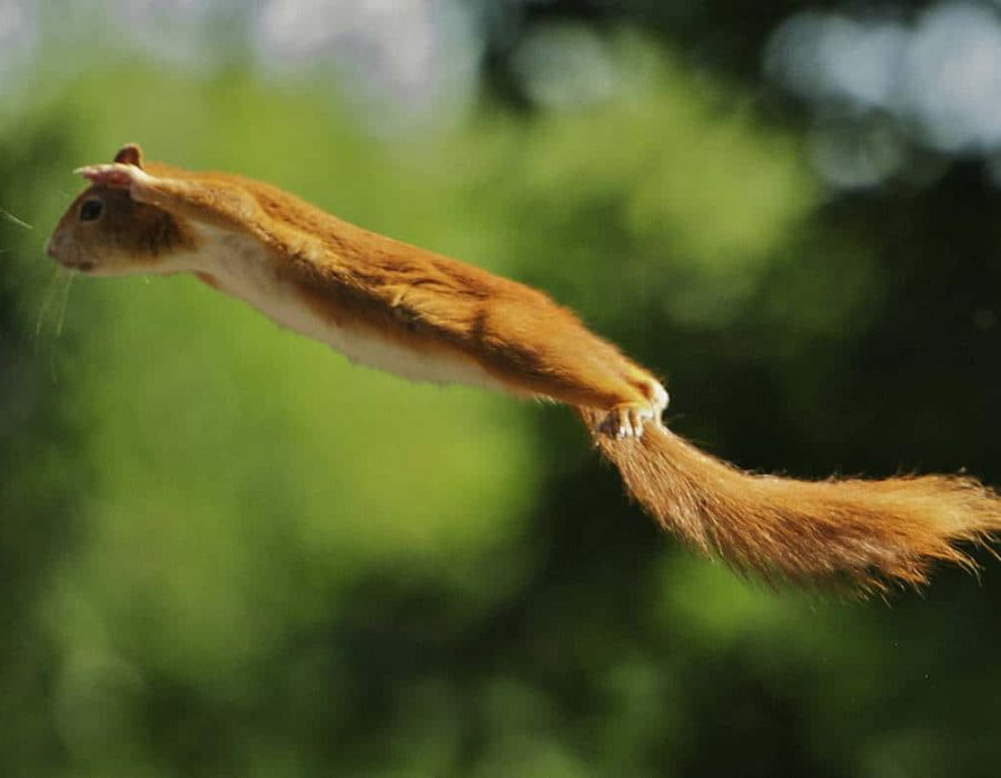 New Website - squirrel flying 12-18