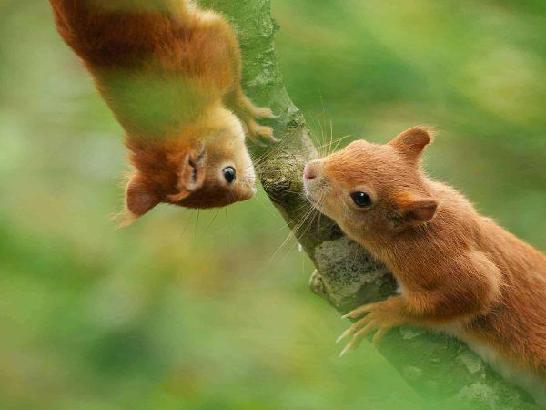 NewWeb-Banner-SquirrelKitsinTree07-18