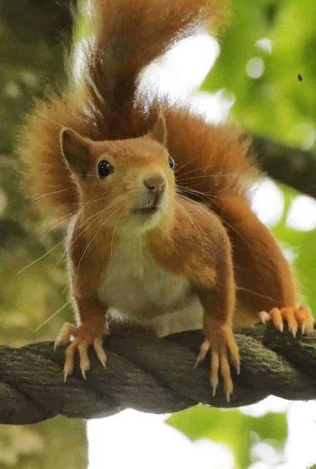RedSquirrel-Michael Cooper-Pt-13-8-19