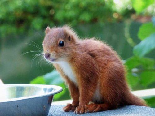 RedSquirrelKit-LauraLee17-9-19
