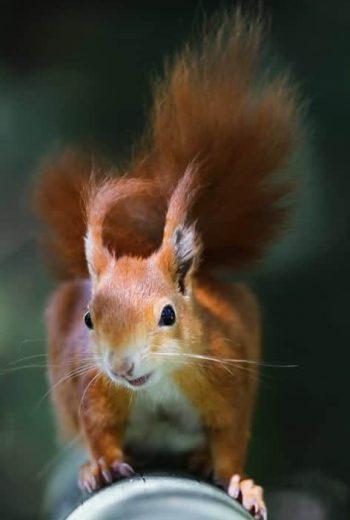 Squirrel-AnnaRogers-Pt17-9-19