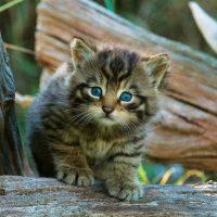 WildcatKit-RGB