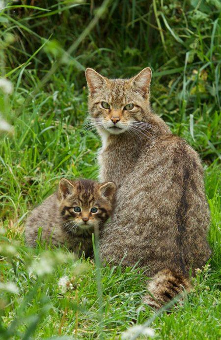 Wildcat&Kit07-21