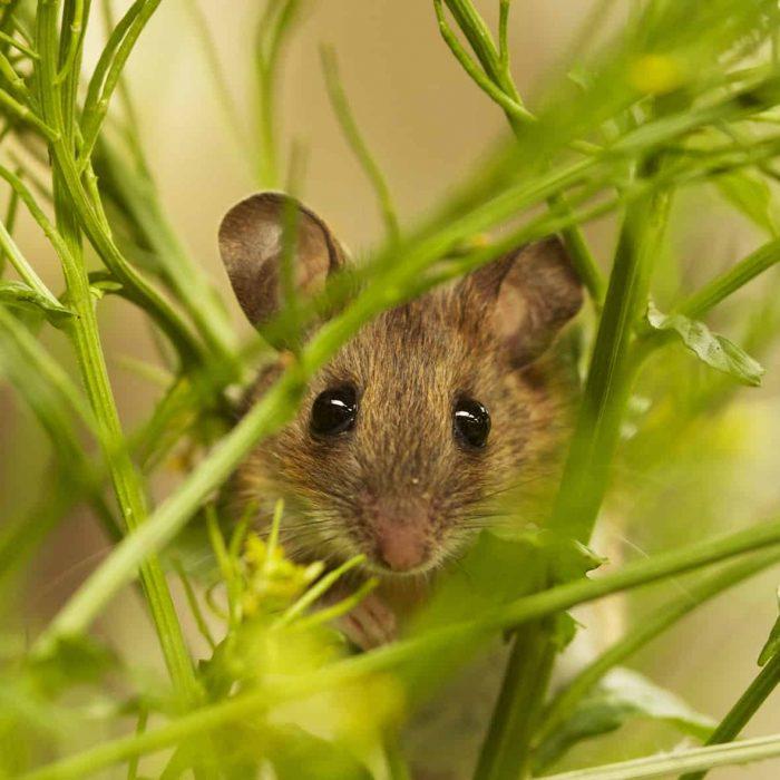 Y-N-Mouse15-03-21